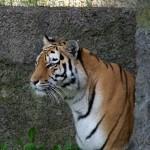 Ogród zoologiczny w Łodzi