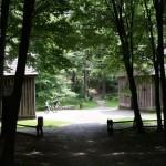 Las Łagiewnicki – największy w Europie kompleks leśny w obrębie miasta