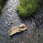 Rzeka Grabia na wysokości sklepu w Baryczy