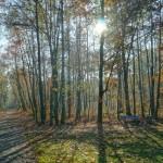 Park Wolności w Pabianicach