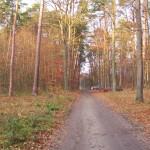 Las w Rydzynach