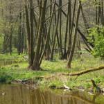 """Zalew """"Rochna"""" nad rzeką Mrogą"""